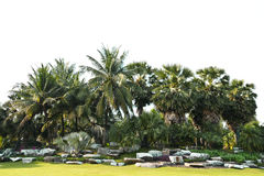 Coconut and plam tree Royalty Free Stock Photos