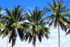 Coconut plam tree on sky, Vientiane, Laos Royalty Free Stock Image