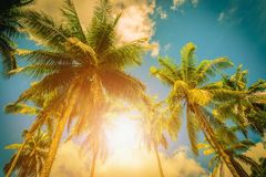Coconut plam tree with sunlight on blue sky background. Vintage. Tone Stock Photos