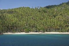 Coconut plantation Royalty Free Stock Image