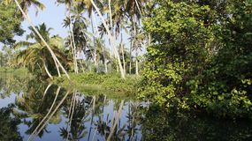 Topical Landscape With Backwater And Coconut Plantation. Coconut plantation with backwater and reflection summertime in Poovar Island India Royalty Free Stock Photography
