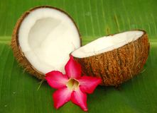 Coconut and plumeria. Fresh coconut and plumeria on banana leaf Stock Photography
