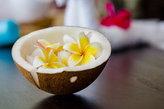 Coconut and Plumeria flower Royalty Free Stock Image