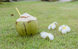 Coconut and Plumeria  relax time on the green grass Royalty Free Stock Photo