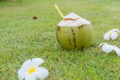Coconut and Plumeria  relax time on the green grass Stock Images