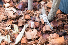 Coconut residue. / natural fertilizer for plan tree Stock Image