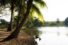 Coconut and river view Royalty Free Stock Photography