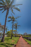 Coconut Road. The coconut Road in the blue sky Royalty Free Stock Photography