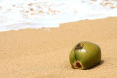 Coconut in the sand Royalty Free Stock Images