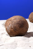 Coconut on sand at beach Stock Image