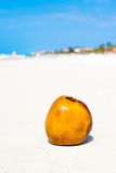 Coconut on a sandy beach in Cuba Royalty Free Stock Photography