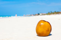 Coconut on a sandy beach in Cuba Royalty Free Stock Images
