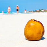 Coconut on a sandy beach in Cuba Royalty Free Stock Photos