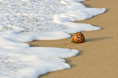 Coconut on sea beach sand and wave in Asia Stock Photo