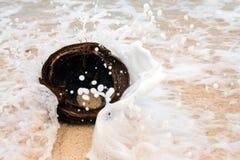Coconut in the sea Stock Image