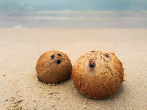 COCONUT WITH SEA Royalty Free Stock Images