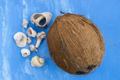 Coconut and seashells on bright blue backgound. Closeup Stock Image