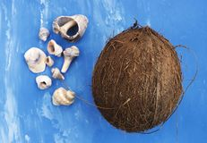 Coconut and seashells on bright blue backgound. Closeup Stock Images