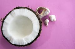 Coconut and seashells, rapana venosa or rapa whelk on purple background. Closeup Stock Photos