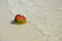 Coconut on the seashore Royalty Free Stock Image