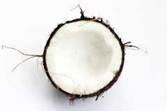 Coconut in section Stock Image