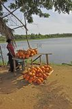 Coconut seller Royalty Free Stock Images