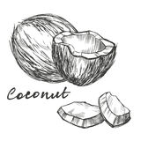 Coconut set hand drawn vector illustration sketch. Coconut set hand drawn vector illustration realistic sketch Stock Photography