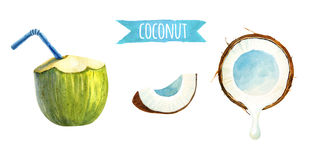 Coconut set, watercolor illustration with clipping path Stock Photos