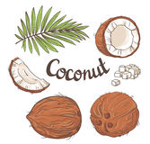 Coconut set - the whole nut, leaves, a coco segment and pulp of a coco. Stock Photography