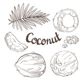 Coconut set - the whole nut, leaves, a coco segment and pulp of a coco. Royalty Free Stock Images