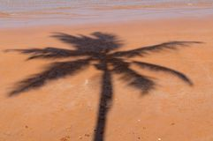 Coconut shadow on the beach, silhouette on red sand stock image