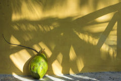 Coconut and shadows in the tropics Stock Photos