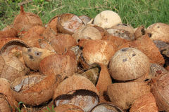 Coconut shell. On the ground Royalty Free Stock Photography