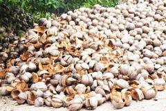 Coconut shell Royalty Free Stock Photo
