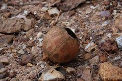 Coconut shell. On the beach Royalty Free Stock Photos