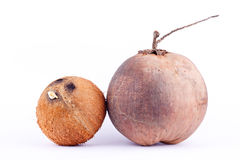 Coconut shell and  brown ripe coconut for coconut milk or oil coconut  on white background healthy fruit food isolated Royalty Free Stock Photography