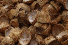 Coconut shell. Background stock photos