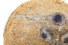 Coconut Shell II Royalty Free Stock Photography