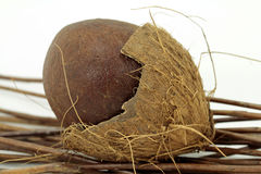 Coconut into shell Royalty Free Stock Images