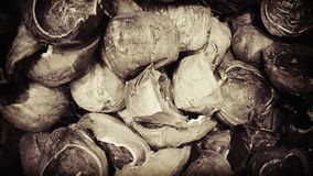 Coconut shell. In one tone stock images