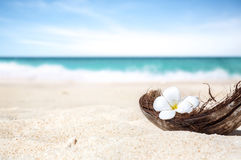 Coconut shell on the sand of a beautiful beach. In Philippine stock image