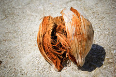 Coconut shell on sand Royalty Free Stock Image