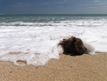 The coconut shell on the sandy beach. The coconut shell on the sandy beach, Kuta, Bali, Indonesia stock photo