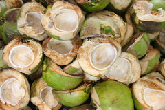 Coconut. Shell used then discarded Royalty Free Stock Photography