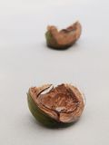 Coconut shells Stock Images