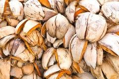 Coconut shells Royalty Free Stock Photography