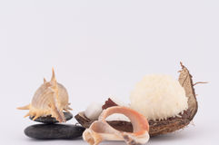 Coconut, Shells and Coconut Sweets. Coconut, sweet coconut and shells on white background stock photography