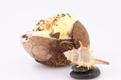 Coconut and Shells. Coconut cream, shells and pebbles on a white background royalty free stock photography