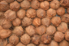 Coconut with shells making a background Stock Photo