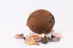 Coconut and Shells. Coconut, shells and pebbles on a white background royalty free stock photo